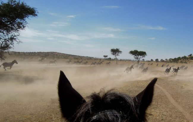 What is your dream riding safari in Africa?
