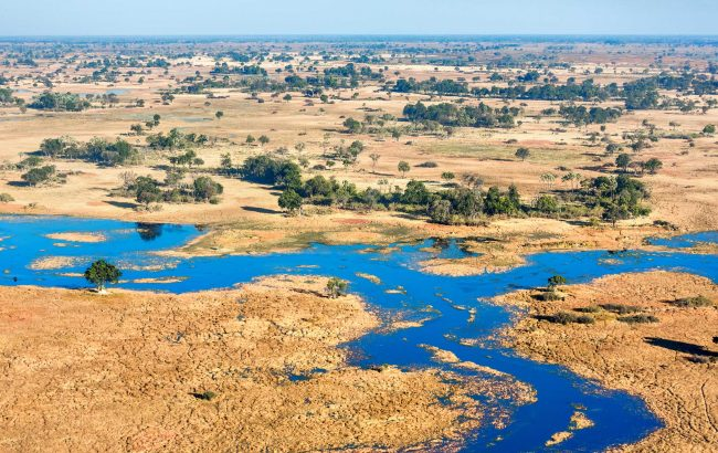 The Buzz about Botswana