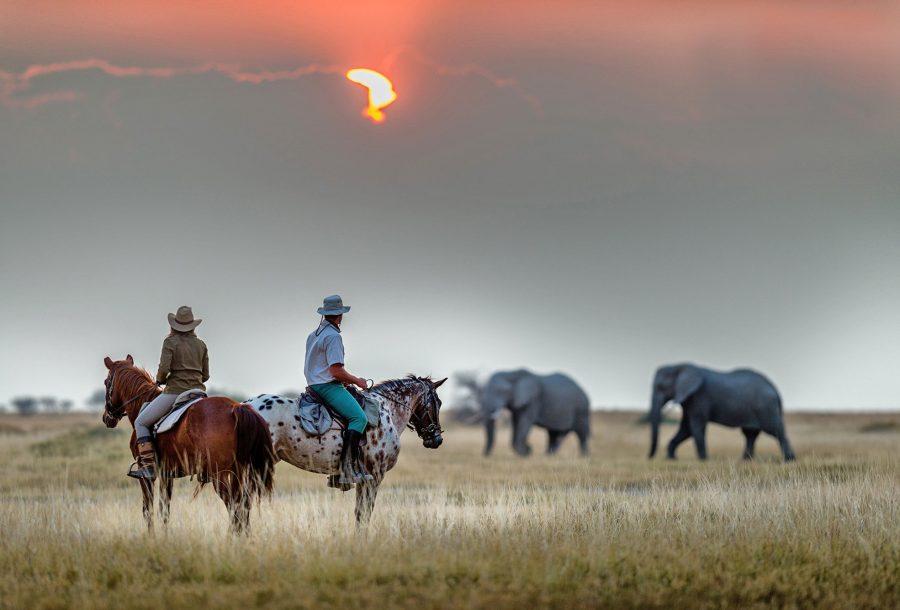 Horse and Elephants