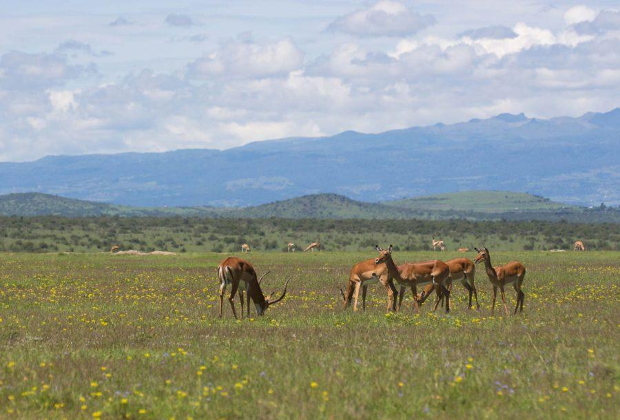 Laikipia Wildlife Kenya